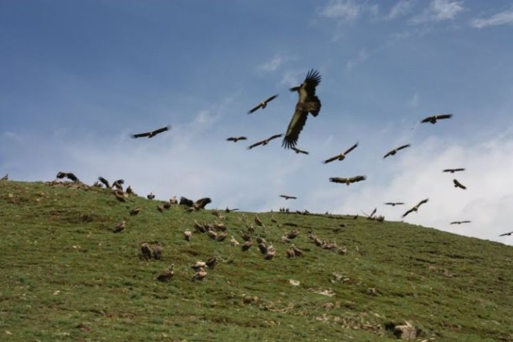 Burials in Tibet. NOT FOR SENSITIVE SOULS! - 12