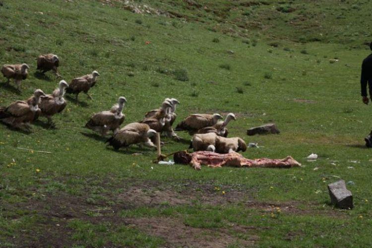 Burials in Tibet. NOT FOR SENSITIVE SOULS! - 16