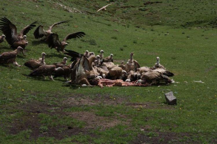 Burials in Tibet. NOT FOR SENSITIVE SOULS! - 17