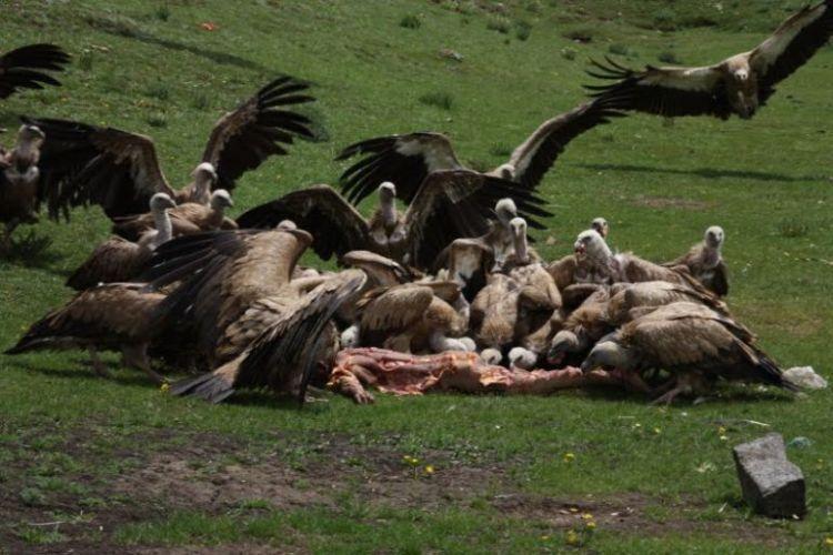 Burials in Tibet. NOT FOR SENSITIVE SOULS! - 18