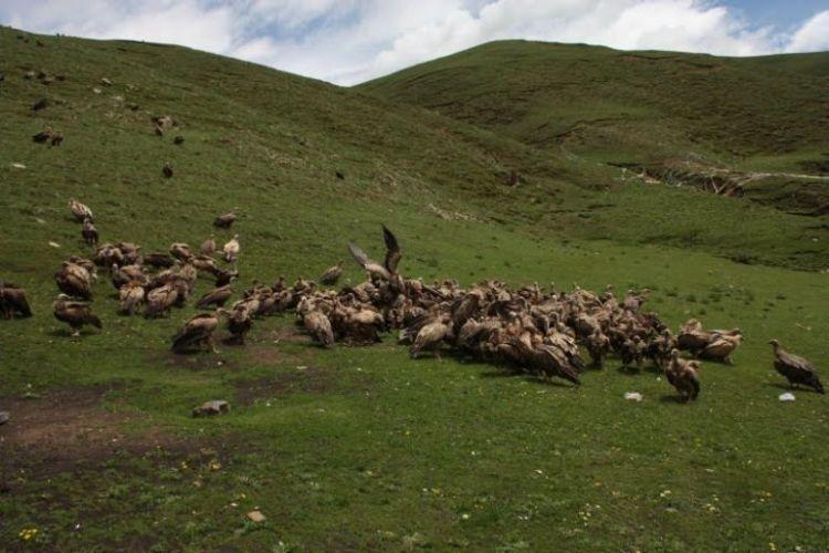 Burials in Tibet. NOT FOR SENSITIVE SOULS! - 24