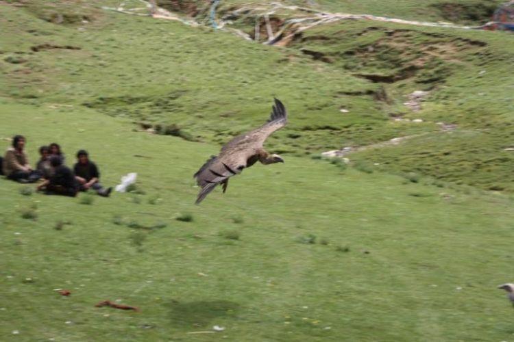 Burials in Tibet. NOT FOR SENSITIVE SOULS! - 37