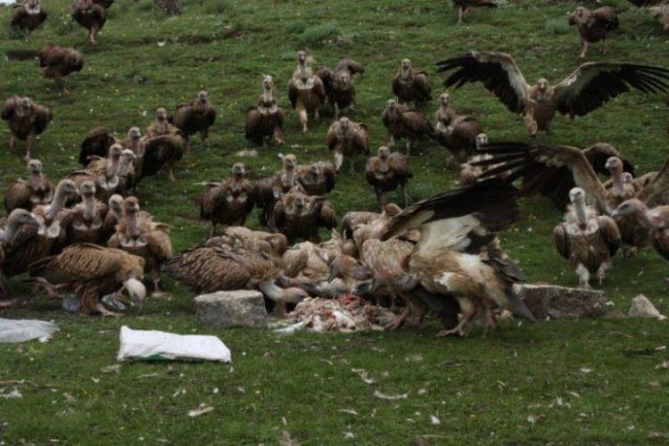 Burials in Tibet. NOT FOR SENSITIVE SOULS! - 55