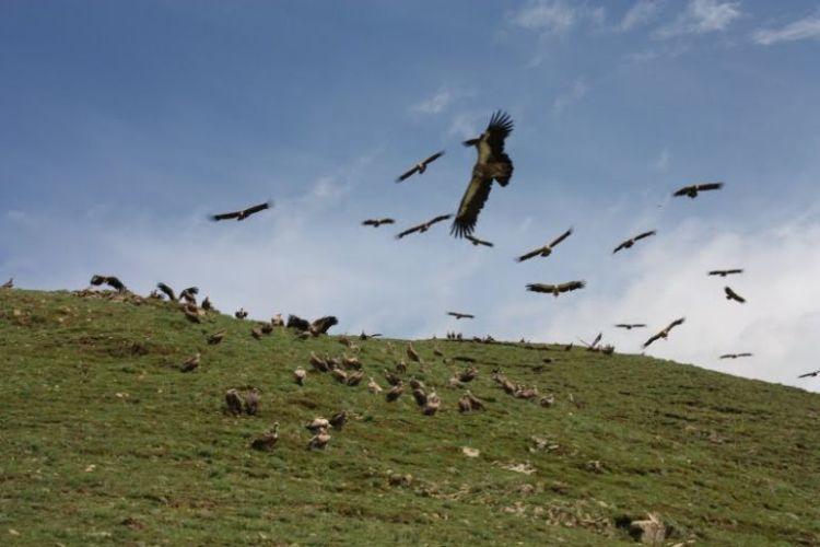 Burials in Tibet. NOT FOR SENSITIVE SOULS! - 61