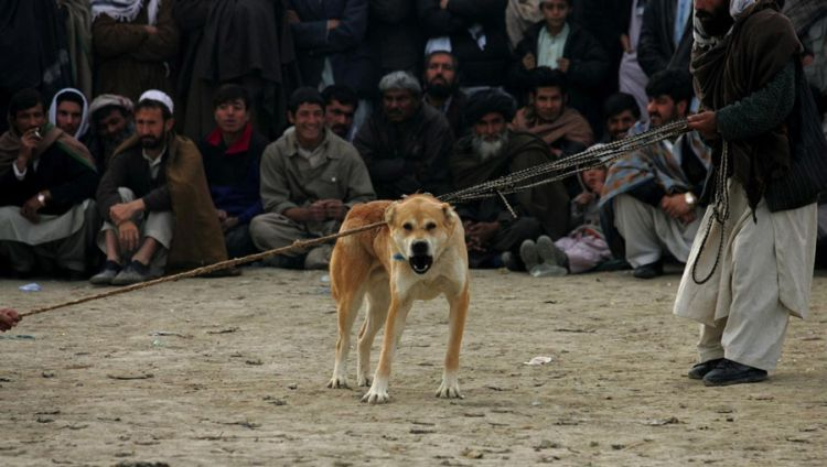 OMG. Dog fight in Afghanistan - 00